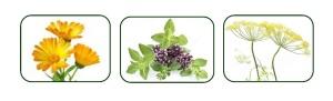 Flower-Herb
