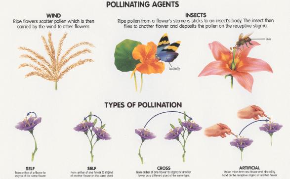 pollination types