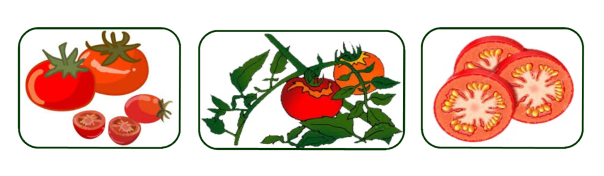 tomato banner only
